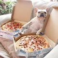 120x120 - Good Pizza & A Dog = Life