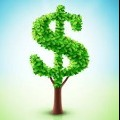 70x70 - Cash Tree